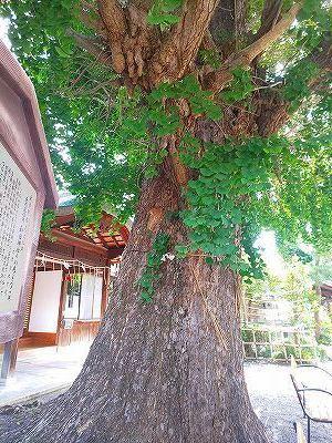 和田神社 (22).jpg