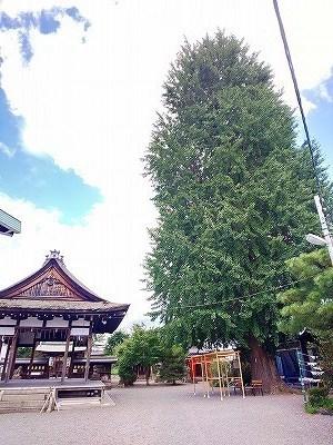 和田神社 (9).jpg