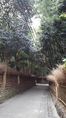 嵐山 竹林 (1).jpg