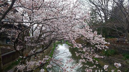 ゴーイング 八幡堀(10).jpg